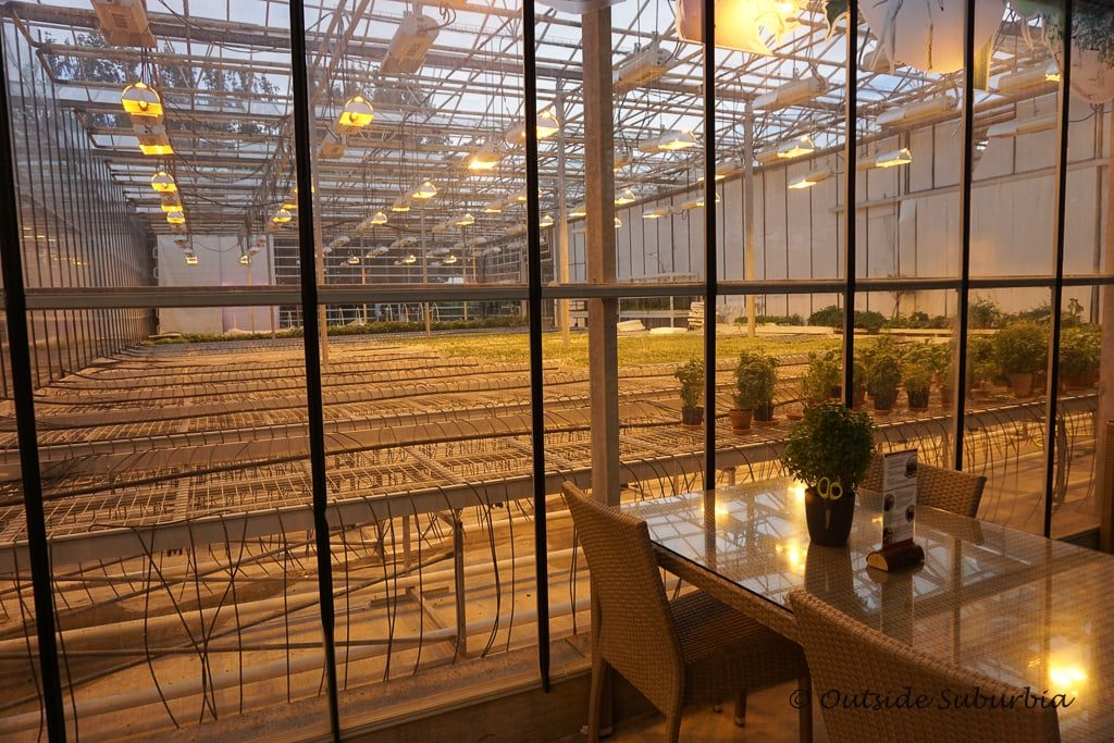 Visiting the Fridheimar Tomato Greenhouse in Iceland - OutsideSuburbia.com