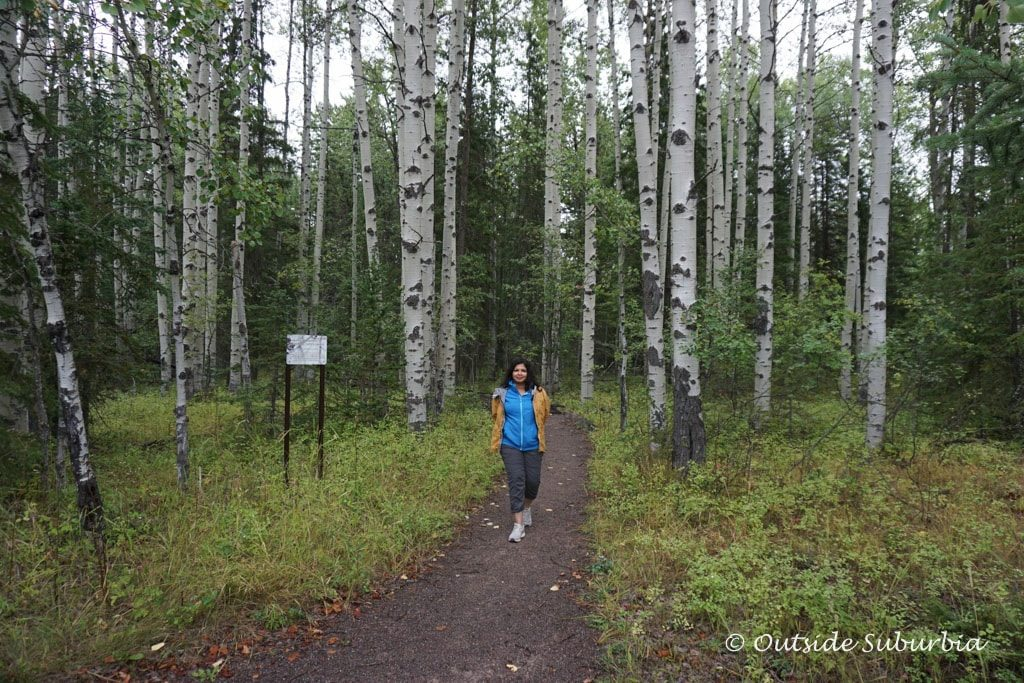 Best hiking trail in Whitefish, MT | Outside Suburbia