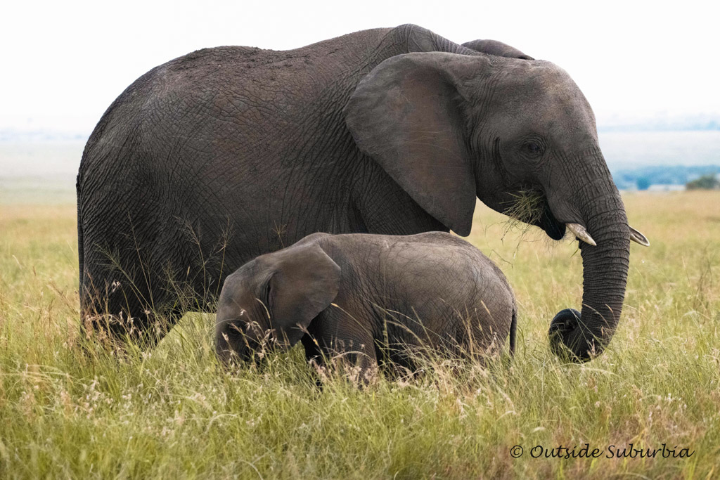 Elephants, just like us love hanging out with their families, they are intelligent, playful and emotional | OutsideSuburbia