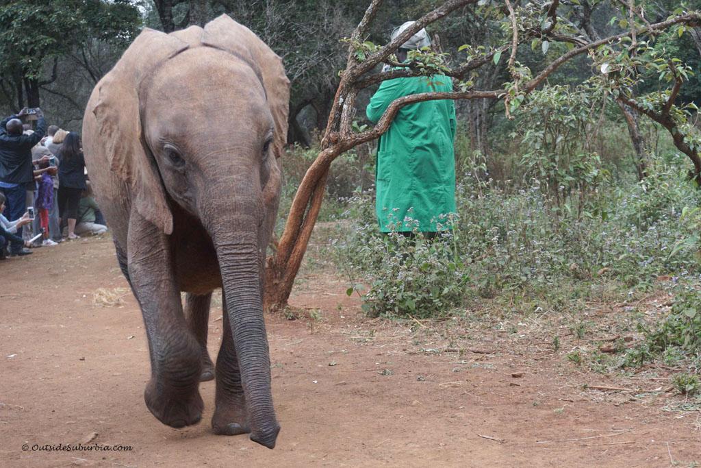 DSWT Visit Nairobi, Kenya - Photo by OutsideSuburbia.com