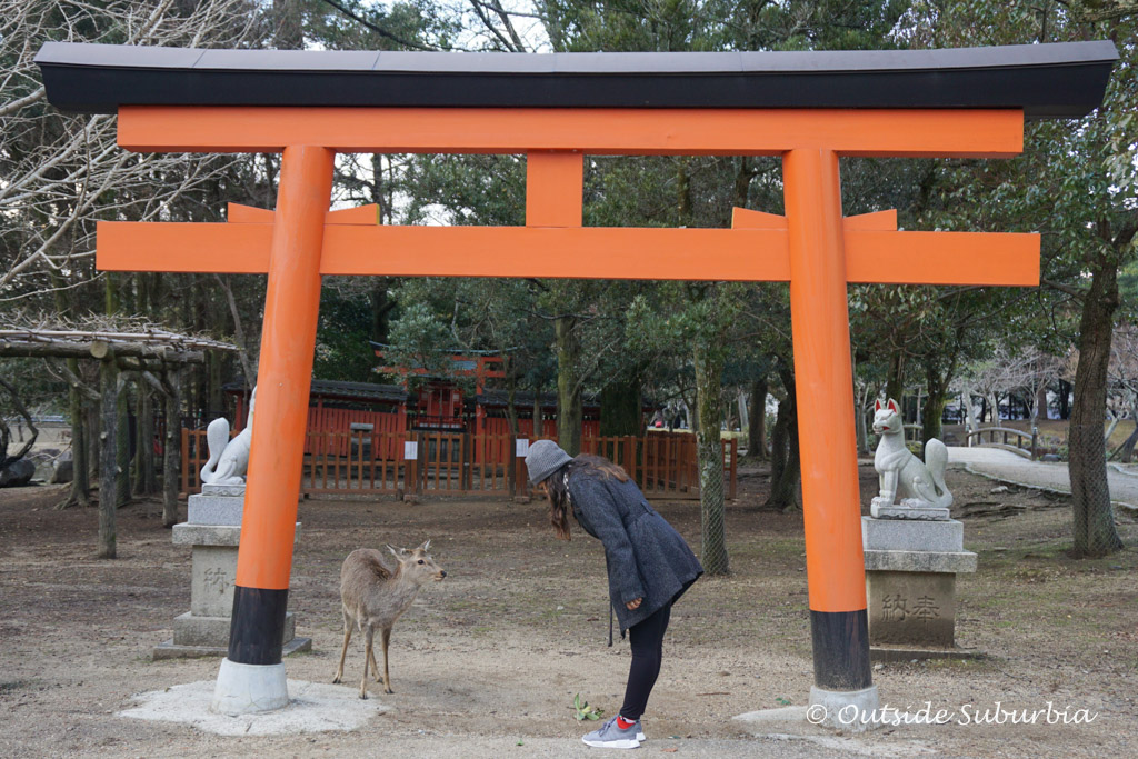 Deer that bow for biscuits in Nara, Japan | Outside Suburbia