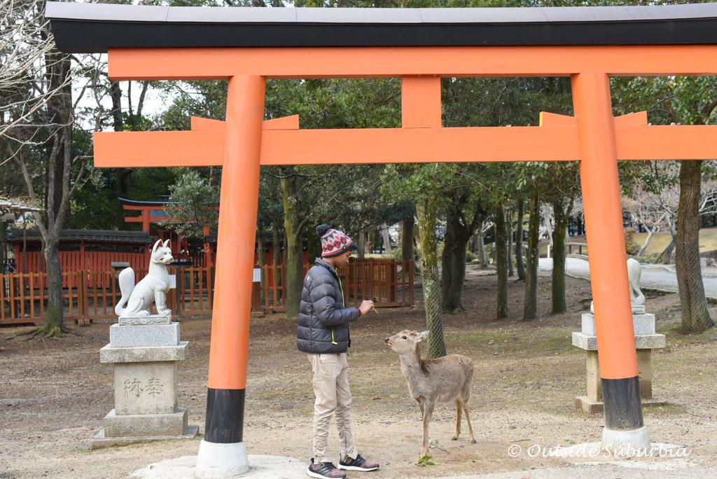 Why do Nara deer bow? | Outside Suburbia