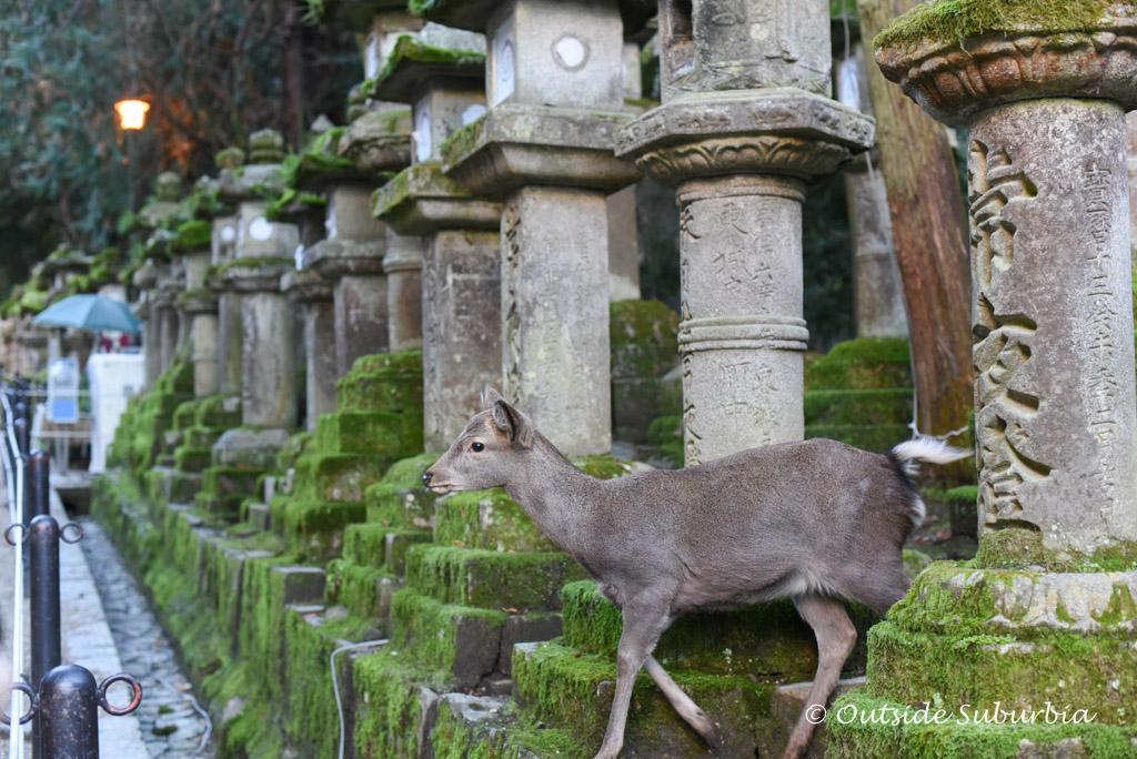 One day Itinerary to visit Nara, Japan | Outside Suburbia