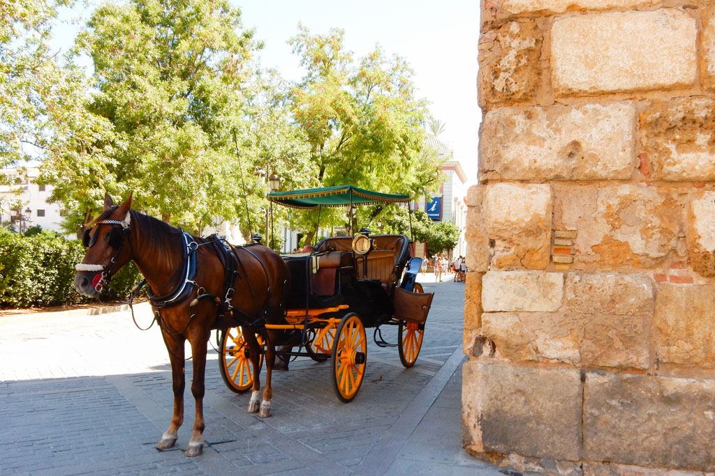 A horse carriage ride around Seville