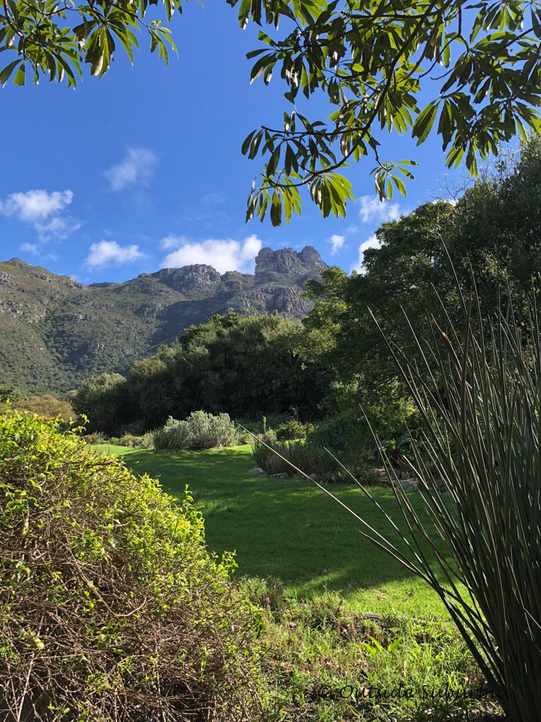 Kirstenbosch Botanical Garden in Cape Town - outsidesuburbia.com