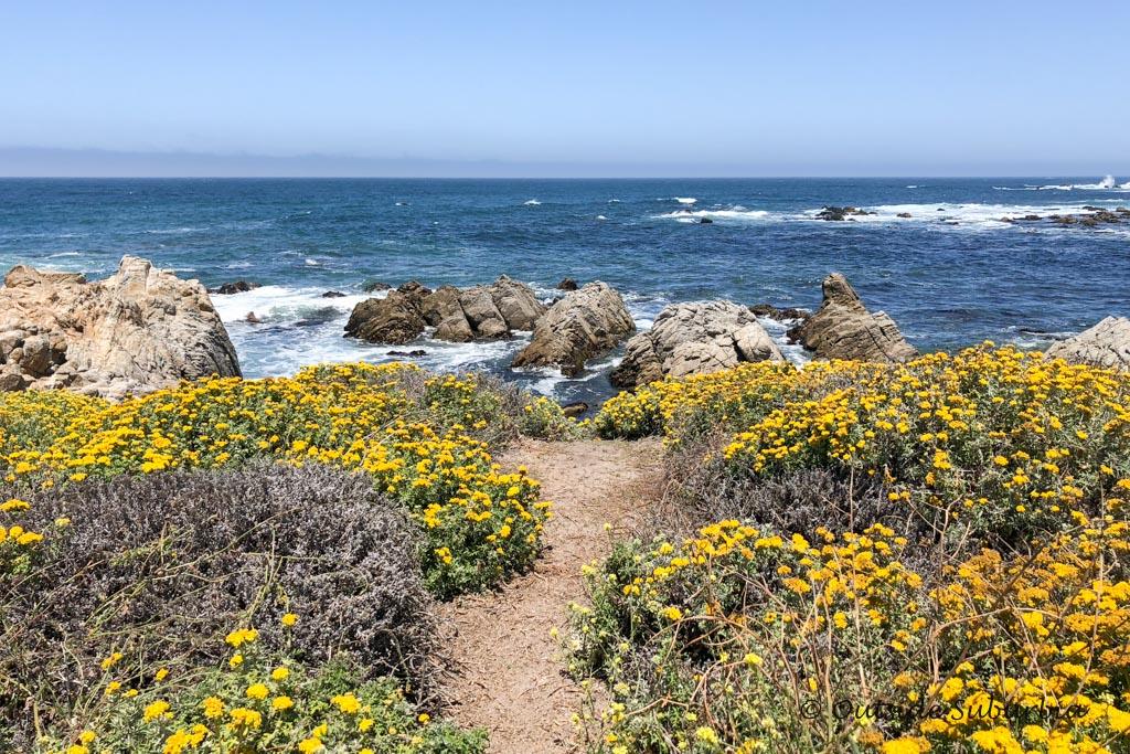 17-Mile Drive, near Monterey Bay in California - Outside Suburbia