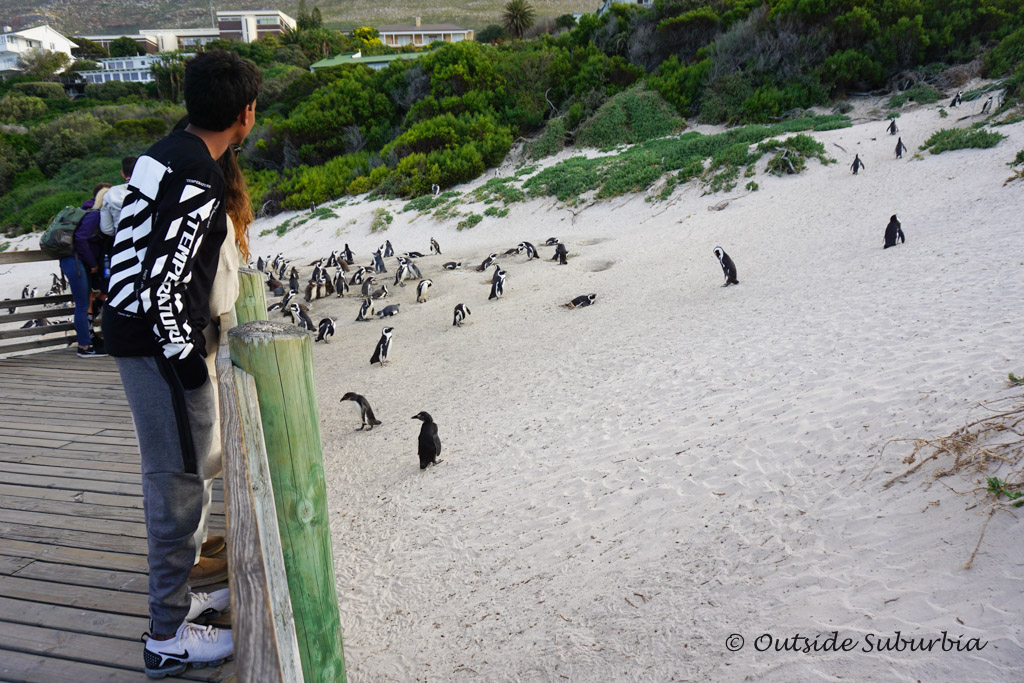 Penguins at Boulders Beach, Cape Town - outsidesuburbia.com