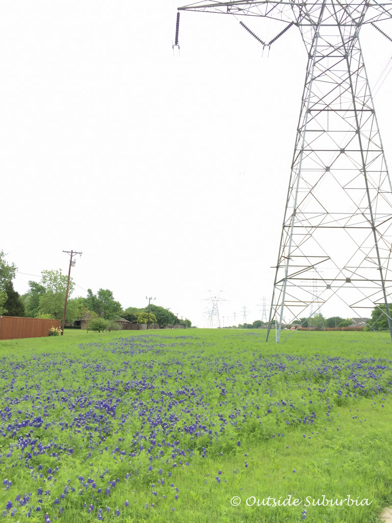 Bluebonnet Trail - Best hiking trail in Plano