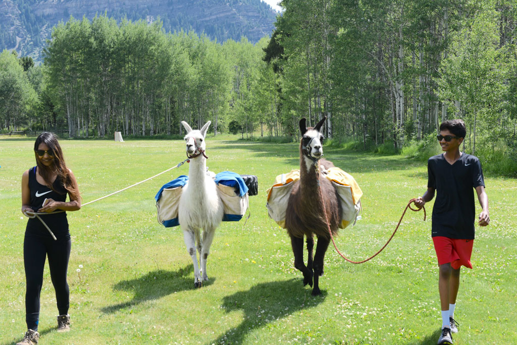 A Picnic and hike with a Llama in the Colorado Rockies - Outside Suburbia