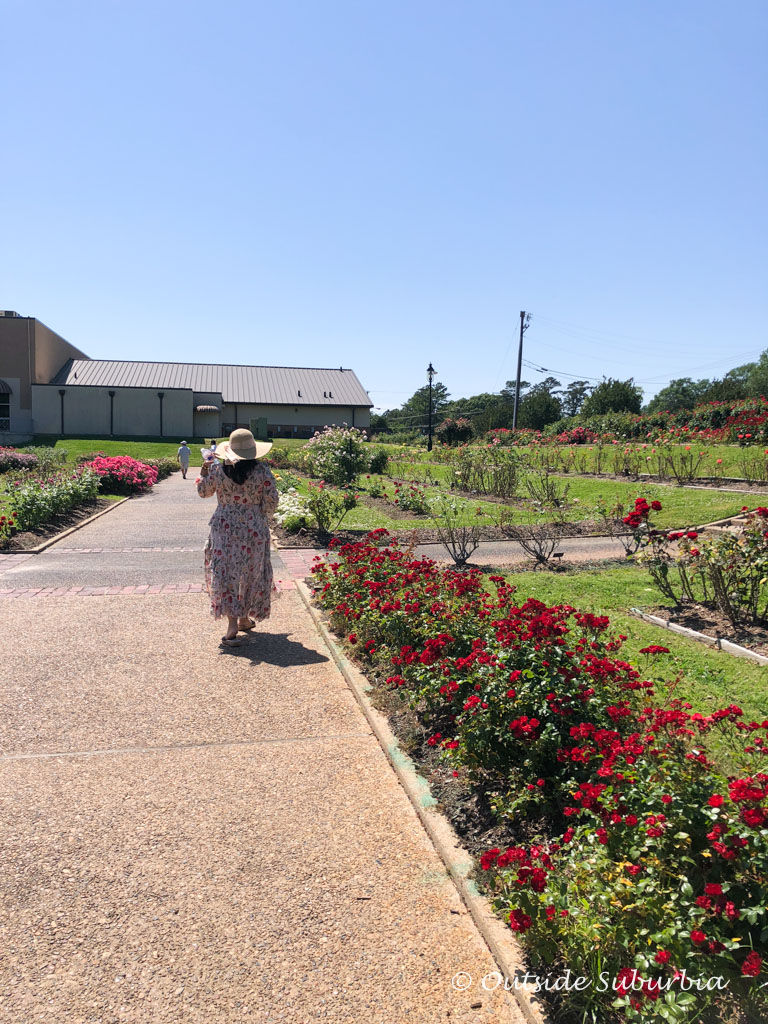 An early Mother's Day outing to the Tyler Rose Garden