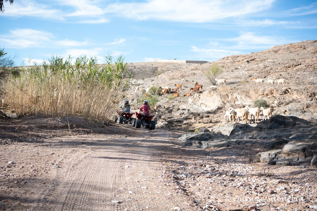 Cruising through some greenery on the ATVs on the Agafay Desert near Marrakech