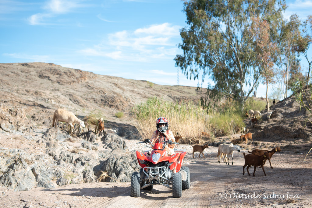 Cruising through some greenery on the Quad bikes on the Agafay Desert near Marrakech