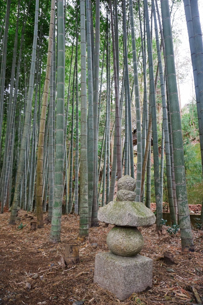 Bamboo Grove - Beautiful Japanese Temples & Zen Gardens of Kyoto | Outside Suburbia