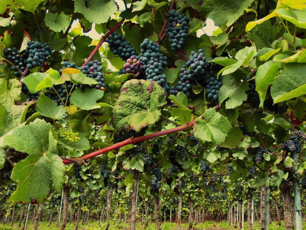 12 Popular Wine Regions in France | Outside Suburbia