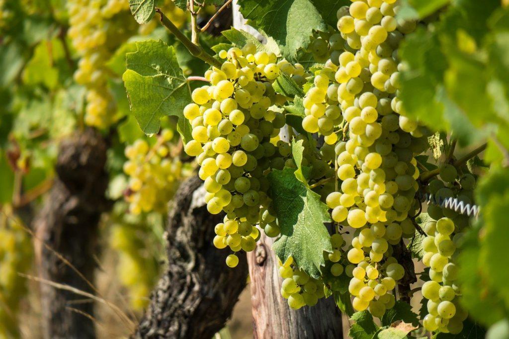 12 Best Wine Regions in France | Outside Suburbia