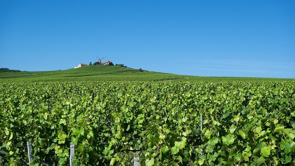Best Wine Regions in France