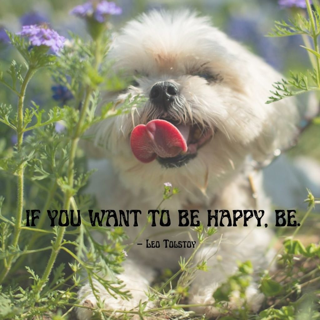 """""""If you want to be happy, be.""""  – Leo Tolstoy"""