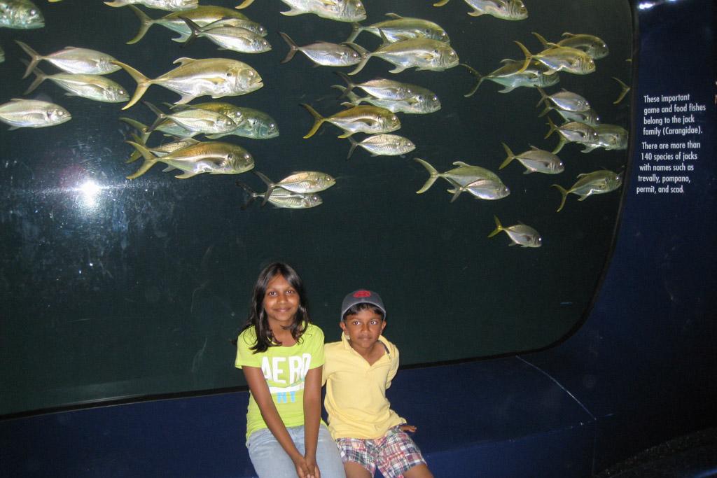 Biggest aquarium in the western hemisphere and the US | Outside Suburbia