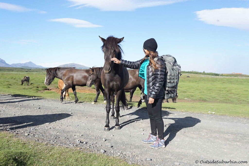 Icelandic horses are super friendly and adorable | Outside Suburbia