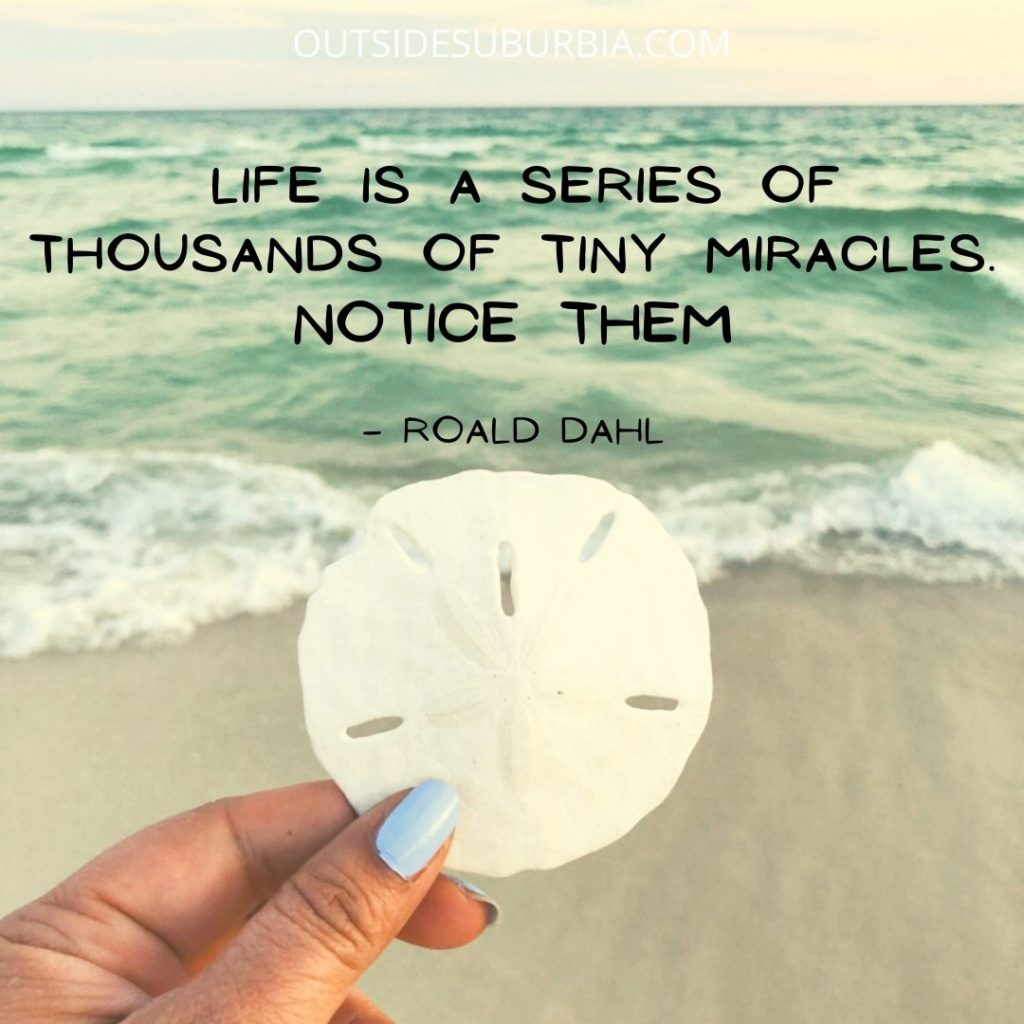 """""""Life is a series of thousands of tiny miracles. Notice them."""" — Roald Dahl"""