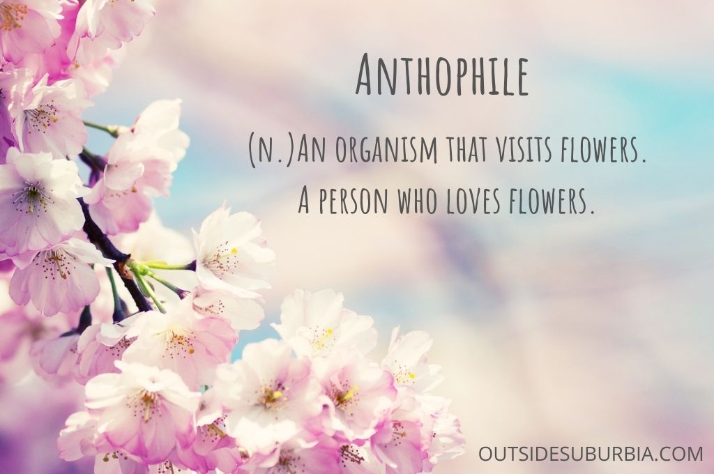 Beautiful Spring & Flower Quotes and Captions   Outside Suburbia
