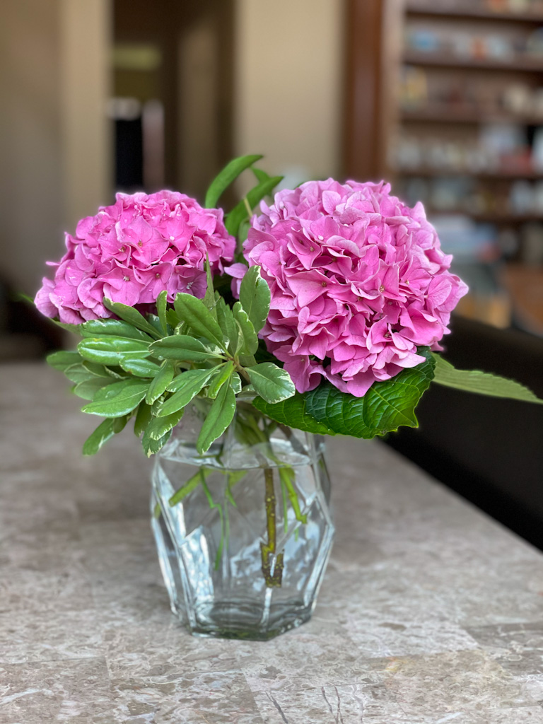 How to keep cut hydrangeas from drooping   Outside Suburbia