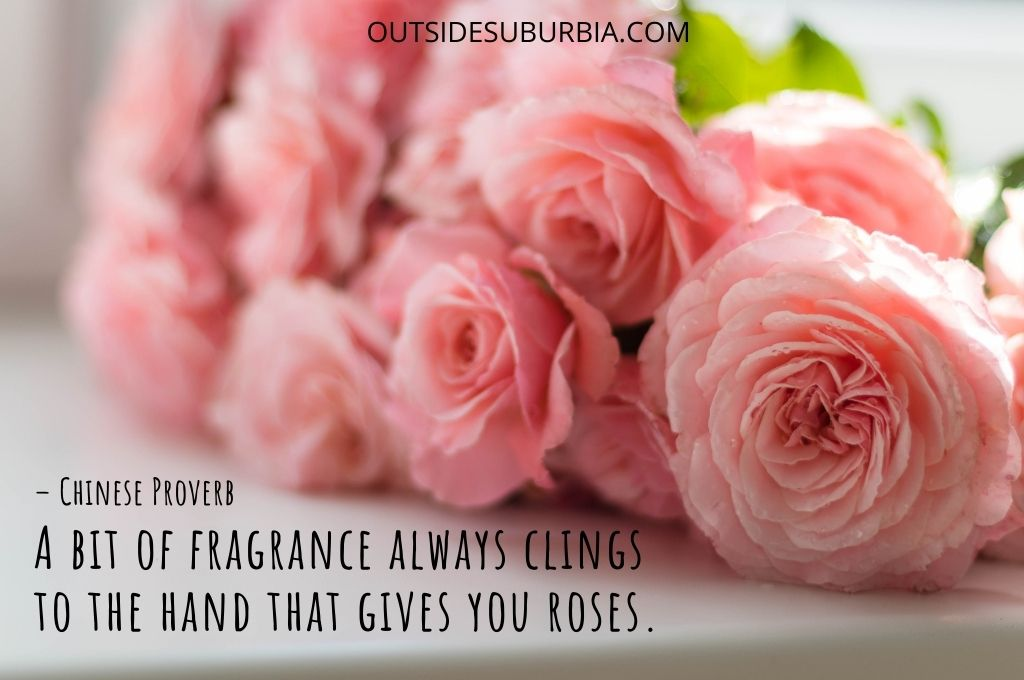 Beautiful Rose Quotes and Captions   Outside Suburbia