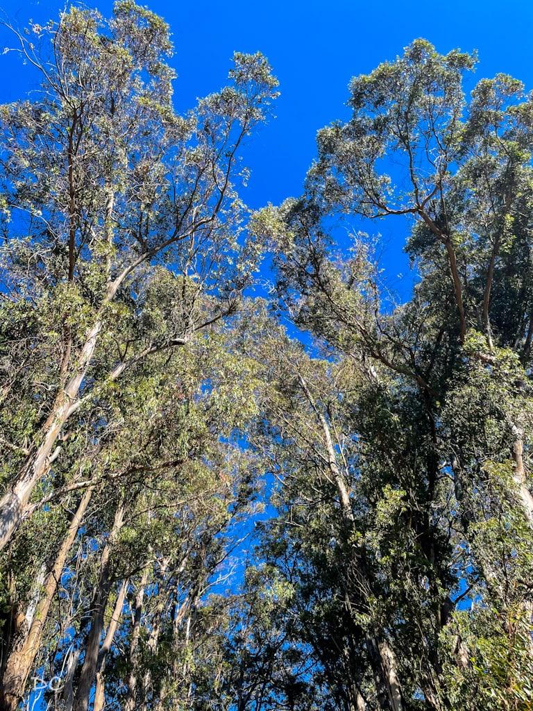 Hosmer Grove Loop Trail | Outside Suburbia