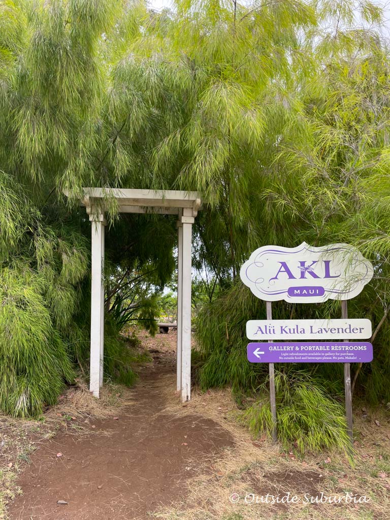 Kula Maui Lavender Farm | Outside Suburbia