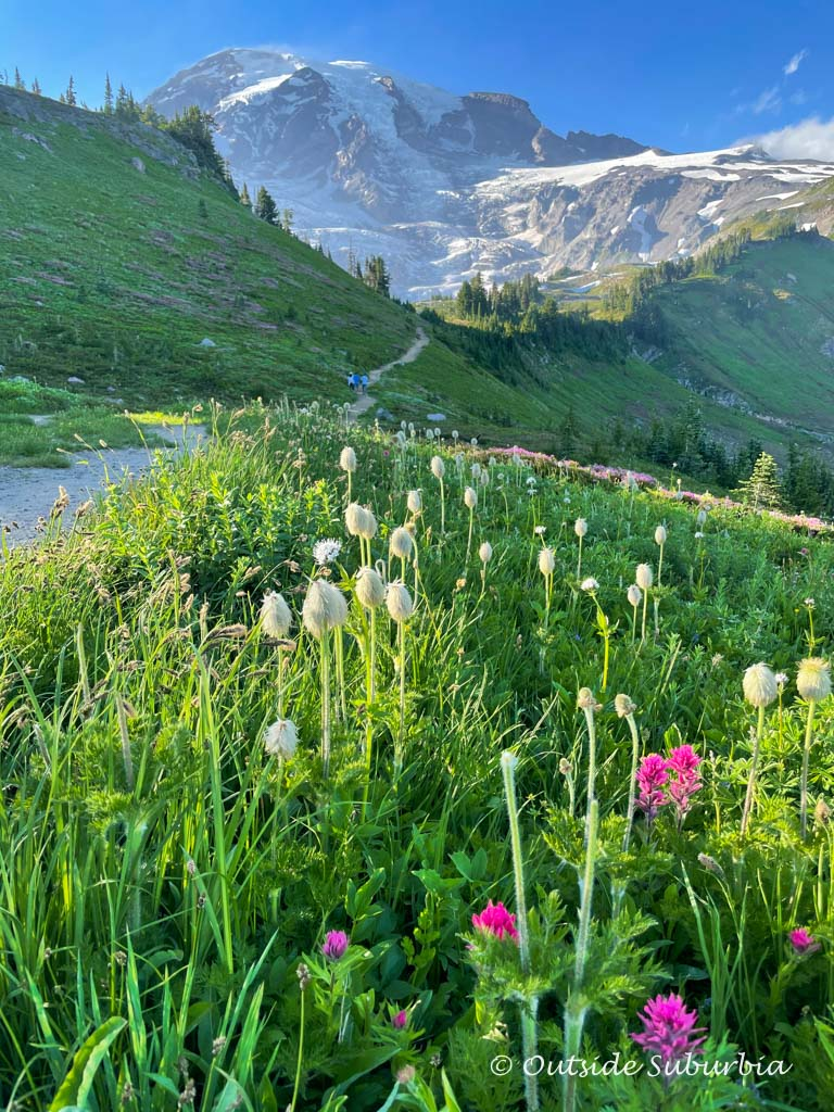 Best hikes & things to do in Paradise, Mount Rainier National Park | Outside Suburbia