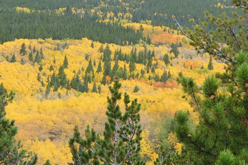 Best places for Fall colors in Rocky Mountain National Park | OutsideSuburbia