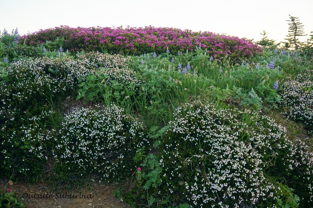 Wildflowers at Mt. Rainier NP | OutsideSuburbia