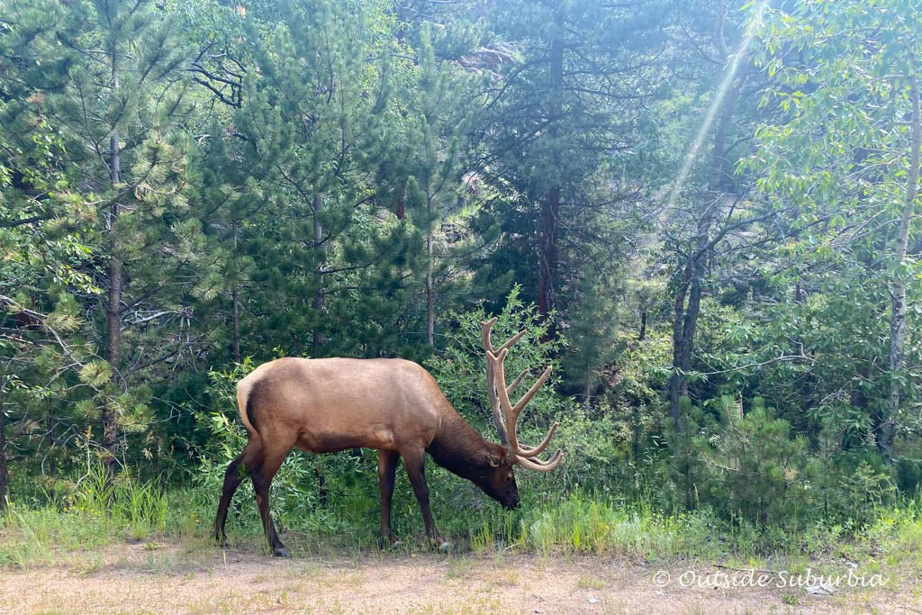 Best place to see wildlife in Rocky Mountain National Park | OutsideSuburbia