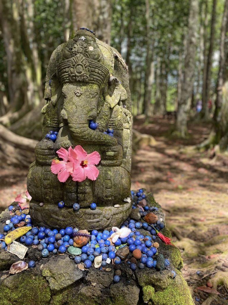 Sacred Rudraksha Forest, Kauai, Hawaii   OutsideSuburbia