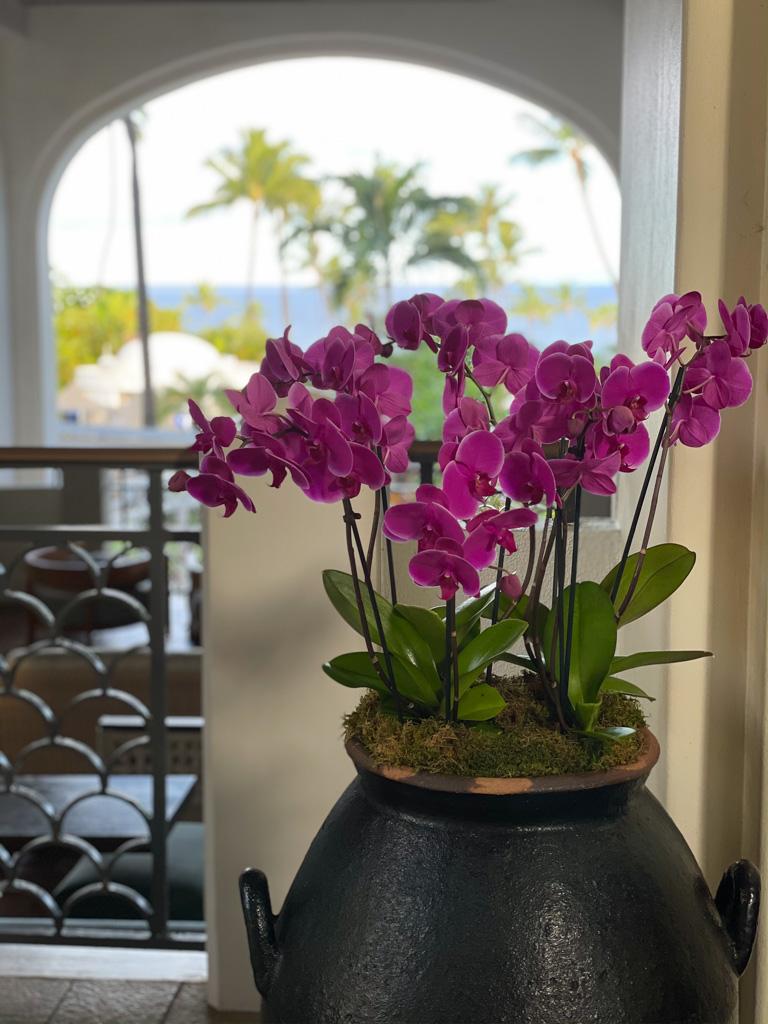 BEST Luxury resort in Maui