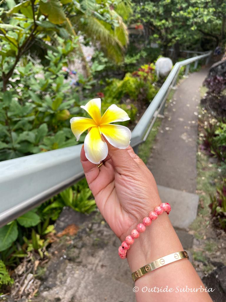 Maui Flowers - Plumeria | OutsideSuburbia